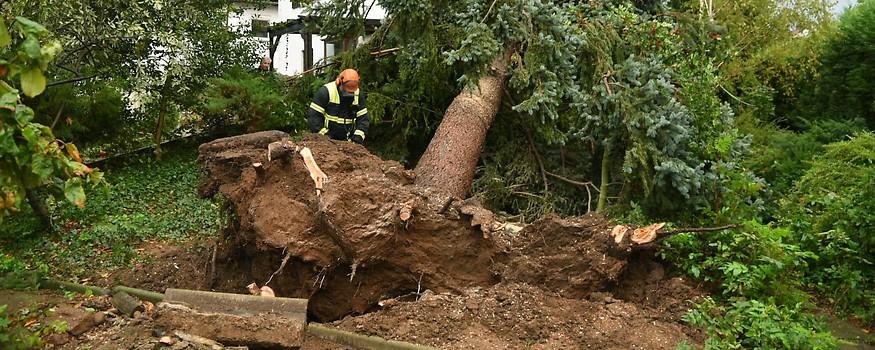 Feuerwehrmann vor einem riesigen umgestürzten Baum