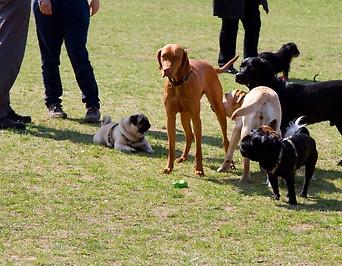 Mehrere Hunde auf einer Wiese