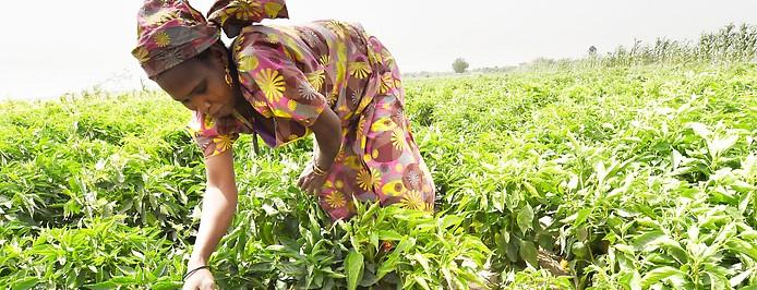 Farmerin in Nigeria