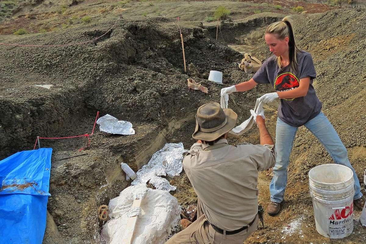 Spuren von gigantischem Massensterben vor 66 Millionen Jahren