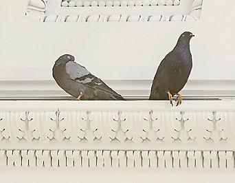 Ausgestopften Vögel der Installation des Künstlers Maurizio Cattelan im Wiener Theseustempel