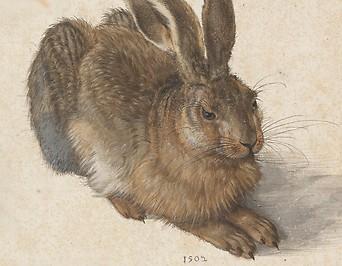 Feldhase von Albrecht Dürer