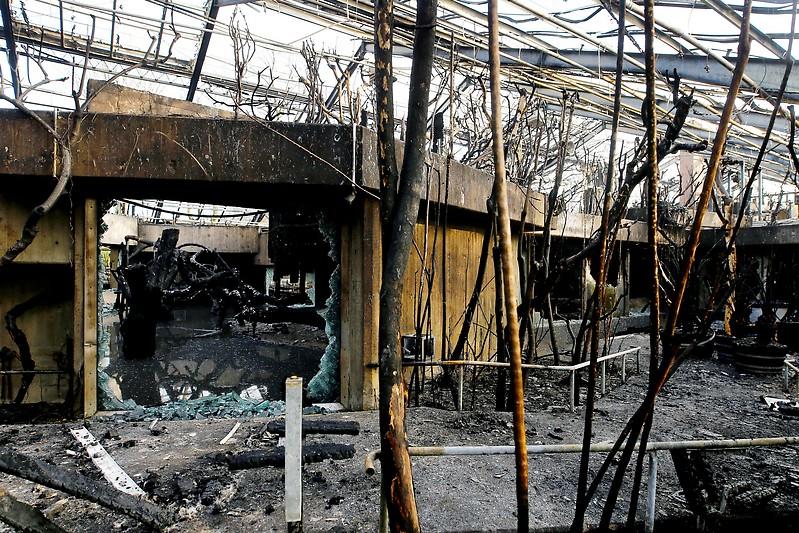 Brand Affenhaus