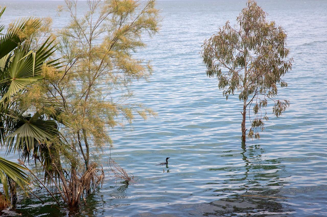 Bäume stehen im See Genzareth unter Wasser