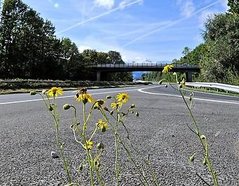 Blumen am Rand einer Autobahn